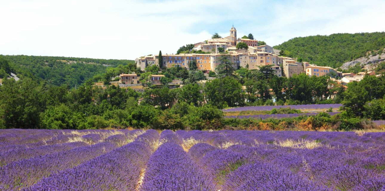 A field of lavender in Southern France.