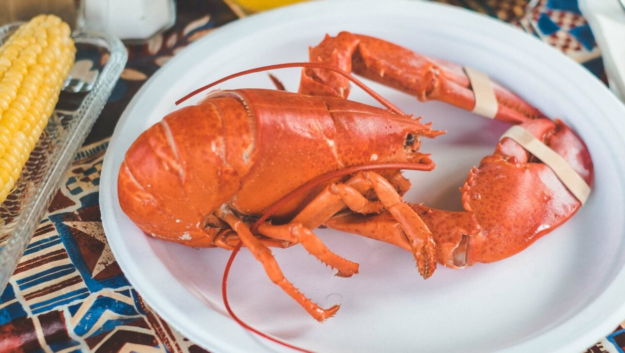 A red lobster on a plate.