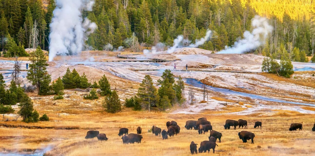 A skyview of Bison.