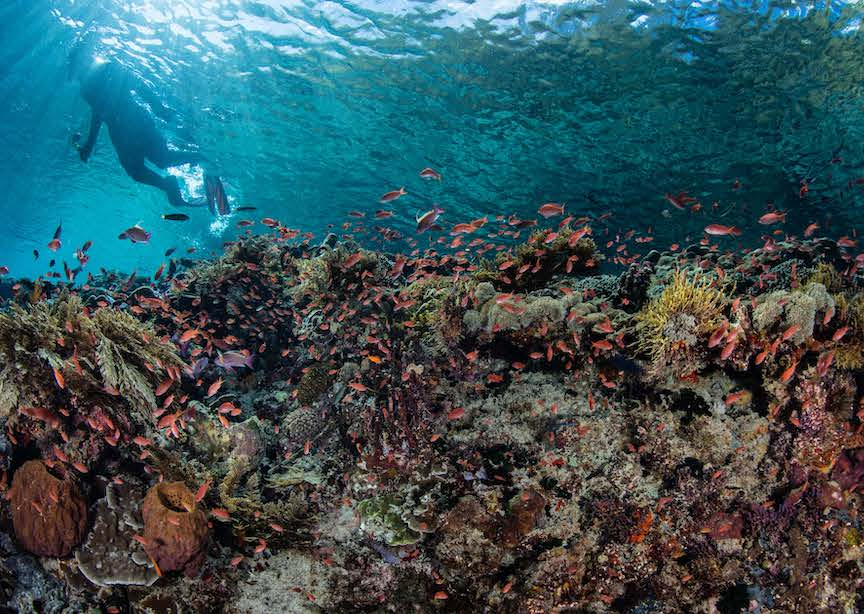 Belize underwater barrier reef snorkeler coral and tropical fish