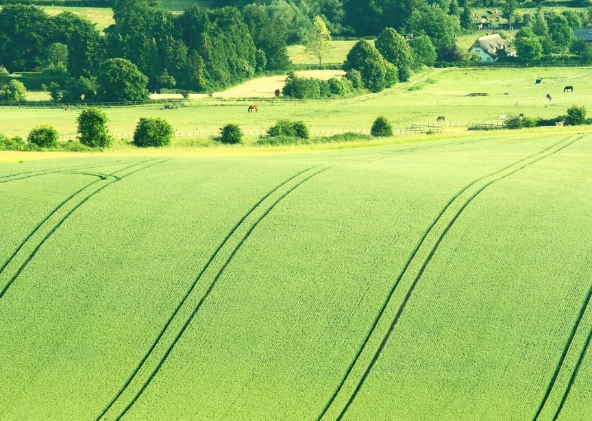 England Wiltshire Rolling Countryside Farmland Cows Grazing Thatched Cottage