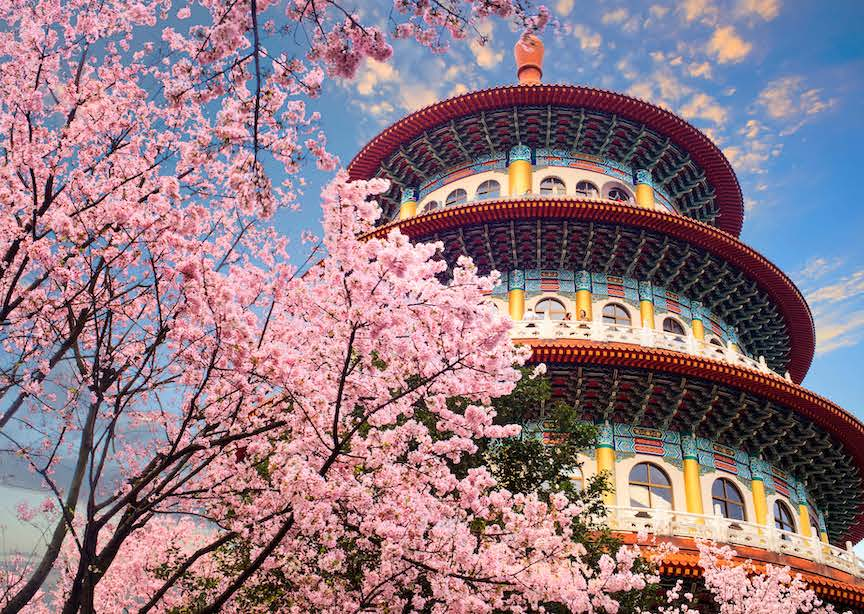 Taiwan architecture and spring blossom
